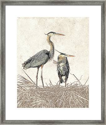 Framed Print featuring the photograph Great Blue Heron Couple - Photographic Drawing by Dawn Currie