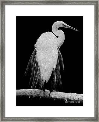 Great Egret In Full Bloom I Framed Print