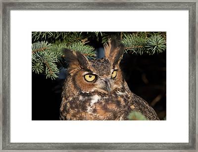 Great Horned Owl 10181802 Framed Print