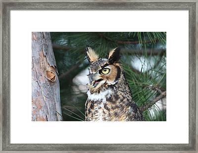 Great Horned Owl 5151801 Framed Print