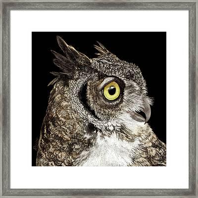 Great-horned Owl Framed Print