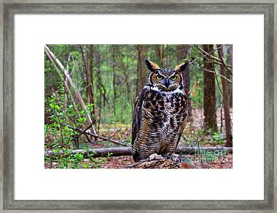 Great Horned Owl Standing On A Tree Log Framed Print