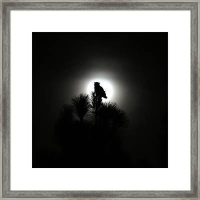 Great Horned Owl With Winter Moon Framed Print by Robin Street-Morris