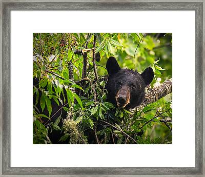 Great Smoky Mountains Bear - Black Bear Framed Print