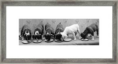 Greedy Pup Framed Print by Fred Morley
