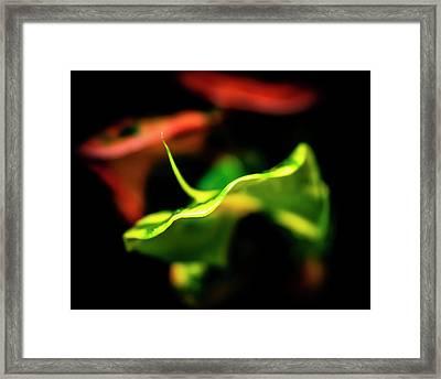 Green Croton Framed Print
