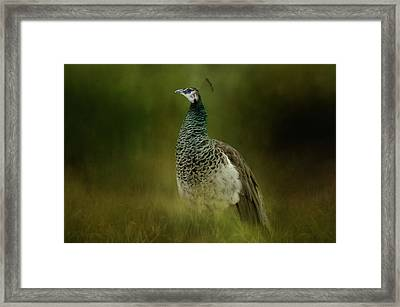 Green Gem In The Meadow  Framed Print