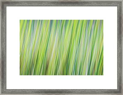 Green Grasses Framed Print