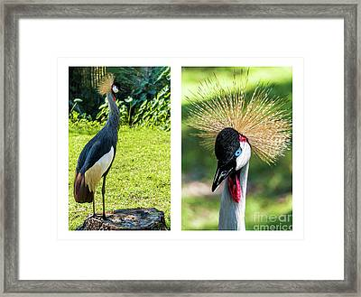 Grey Crowned Crane Gulf Shores Al Collage 8 Diptych Framed Print