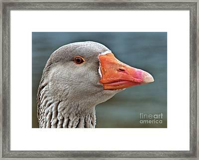 Grey Goose Framed Print