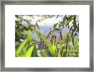 Gungo Peas Framed Print
