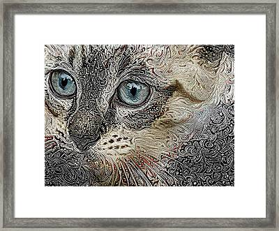 Gypsy The Siamese Kitten Framed Print