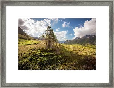 Haiku Forest Framed Print