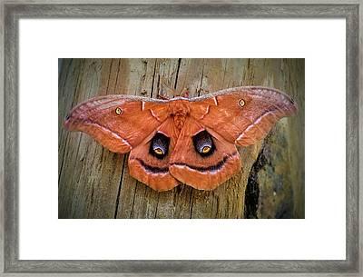 Halloween Moth Framed Print