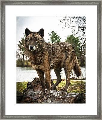 Handsome Niko Framed Print