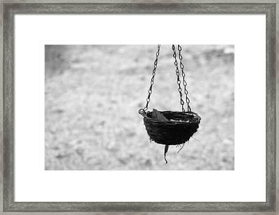 Hanging Basket Framed Print