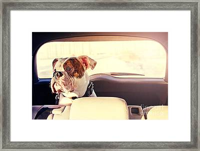 Happy Dog Traveling In The Car Boot Framed Print by Little Moon