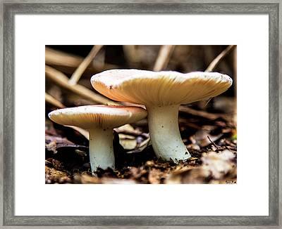 Happy Together Framed Print