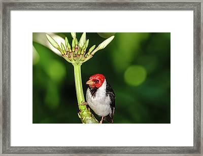 Happy Valentine's Day Bird Framed Print