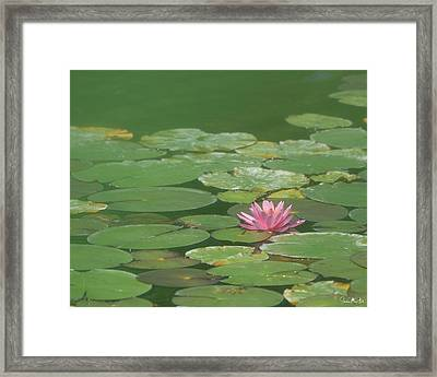 Harmonious Pink Waterlily Framed Print