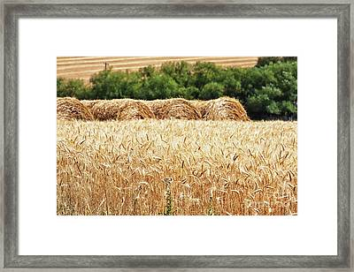 Framed Print featuring the photograph Harvest Time In Idaho by Tatiana Travelways