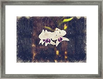 Hawaiian Tree Orchid Framed Print