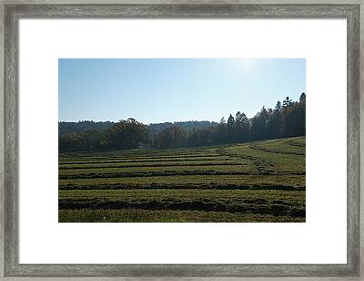 Haymaking Framed Print