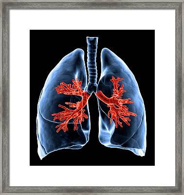 Healthy Lungs, Artwork Framed Print by Science Photo Library - Andrzej Wojcicki