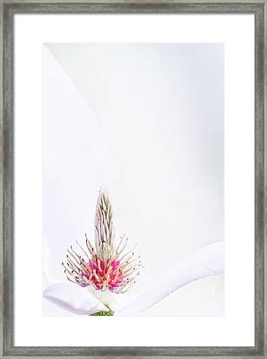 The Heart Of A Magnolia Framed Print