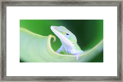Hello, Anole. 2 Framed Print