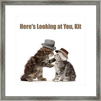 Framed Print featuring the photograph Here's Looking At You, Kit by Warren Photographic