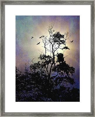 Herons At Dusk Framed Print