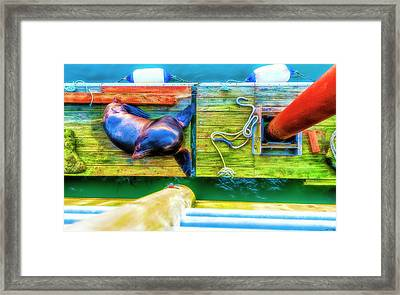 Hey You Up There Framed Print