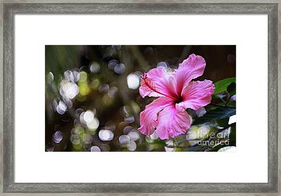 Framed Print featuring the photograph Hibiscus Flower Bloom by Pablo Avanzini