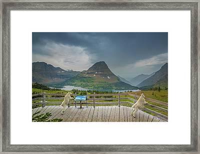 Hidden Lake Overlook // Glacier National Park Framed Print
