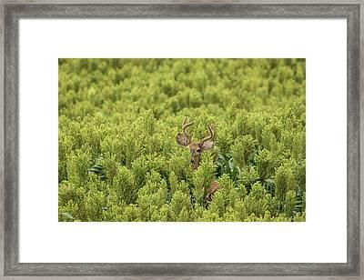 Framed Print featuring the photograph Hidden by Scott Bean
