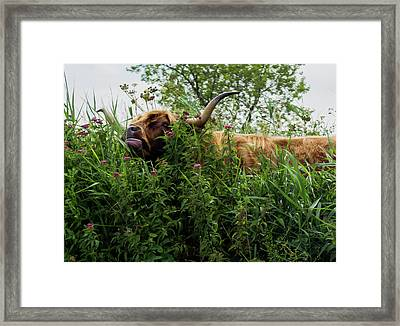 Framed Print featuring the photograph Highland Cow In Tall Grass by Scott Lyons