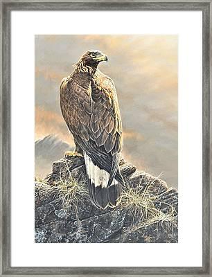 Highlander - Golden Eagle Framed Print