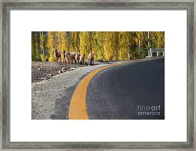Highway Story Framed Print