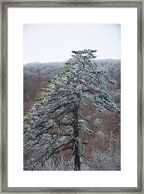 Hoarfrost Gathers Framed Print