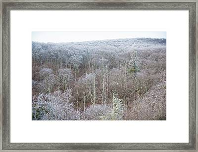 Hoarfrost In The Tree Tops Framed Print