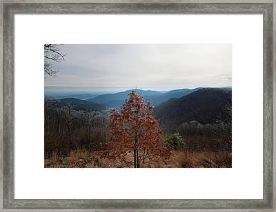 Hoarfrost On Fall Leaves Framed Print