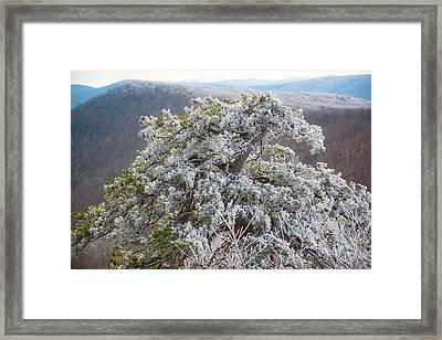 Hoarfrost On Trees Framed Print