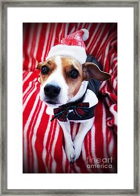 Holiday Jack Framed Print
