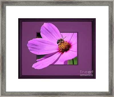 Honey Bee On Pink Framed Print