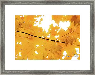 Honey Colored Happiness Framed Print