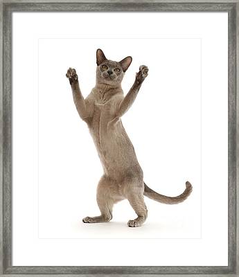 Framed Print featuring the photograph Hooray For The Weekend by Warren Photographic