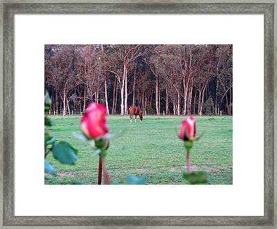 Horse And Roses Framed Print