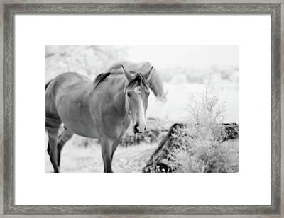 Horse In Infrared Framed Print