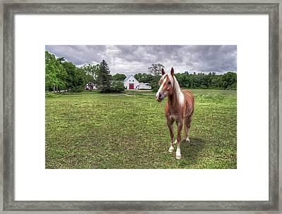 Horse In Pasture Framed Print